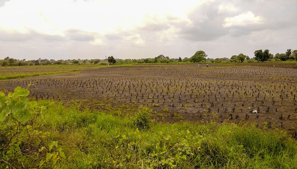 The damaged fields in Karanji village. The LPS beneficiaries' lands were perpendicular to the canal. As the spread of the flood was larger, almost everything was washed away