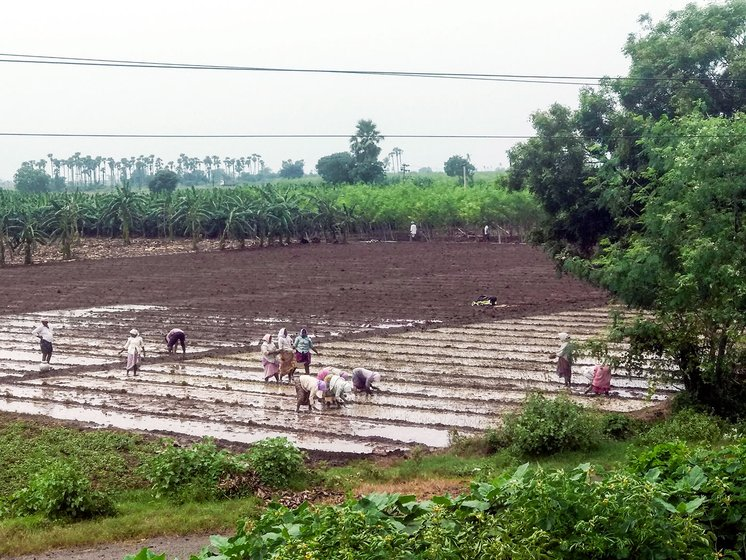 Crops being grown in Undavalli being grown in lands which are not given for pooling