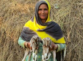 Husn Ara's small world of goats and hopes