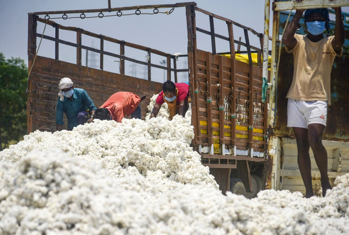 Huge quantities of cash crops lie unsold across India – like cotton in Maharashtra. A hunger crisis looms, yet farmers in Vidarbha a plan to sow cotton, not food crops, once again this kharif season