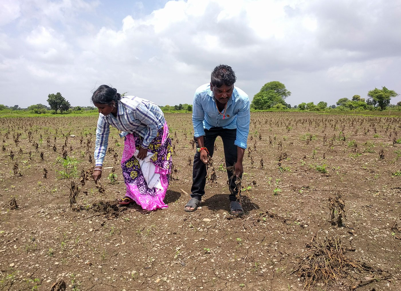 Kuntawar Sangeetha (left) and Kuntawar Gajanan (right) clearing the dead plants on their farm. They are preparing their land for cultivating chickpea in Rabi season