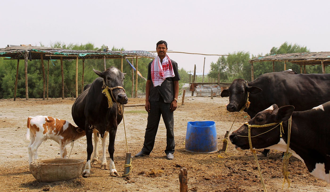 Tamezuddin Mandal with his cross-breed cows