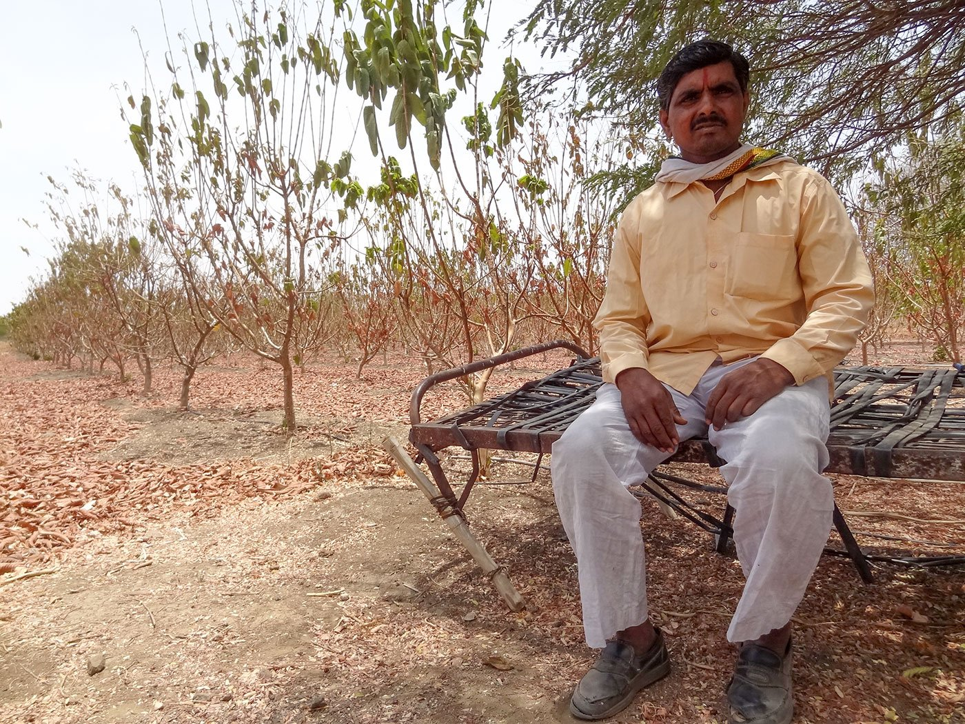 Prahlad Dhoke sits against the backdrop of his dying orchard in the middle of his arid farm; he says he spends hours every day to tend to his farm