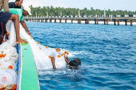 The Great Coral Grief of Lakshadweep islands