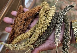 'The soil does not need poison to kill pests'