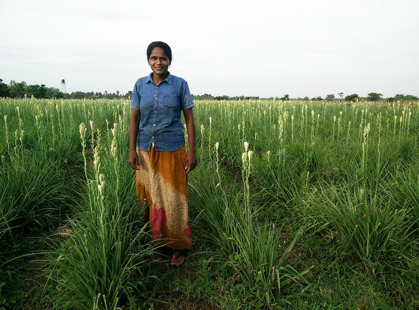 Chandra in her field of tuberose flowers