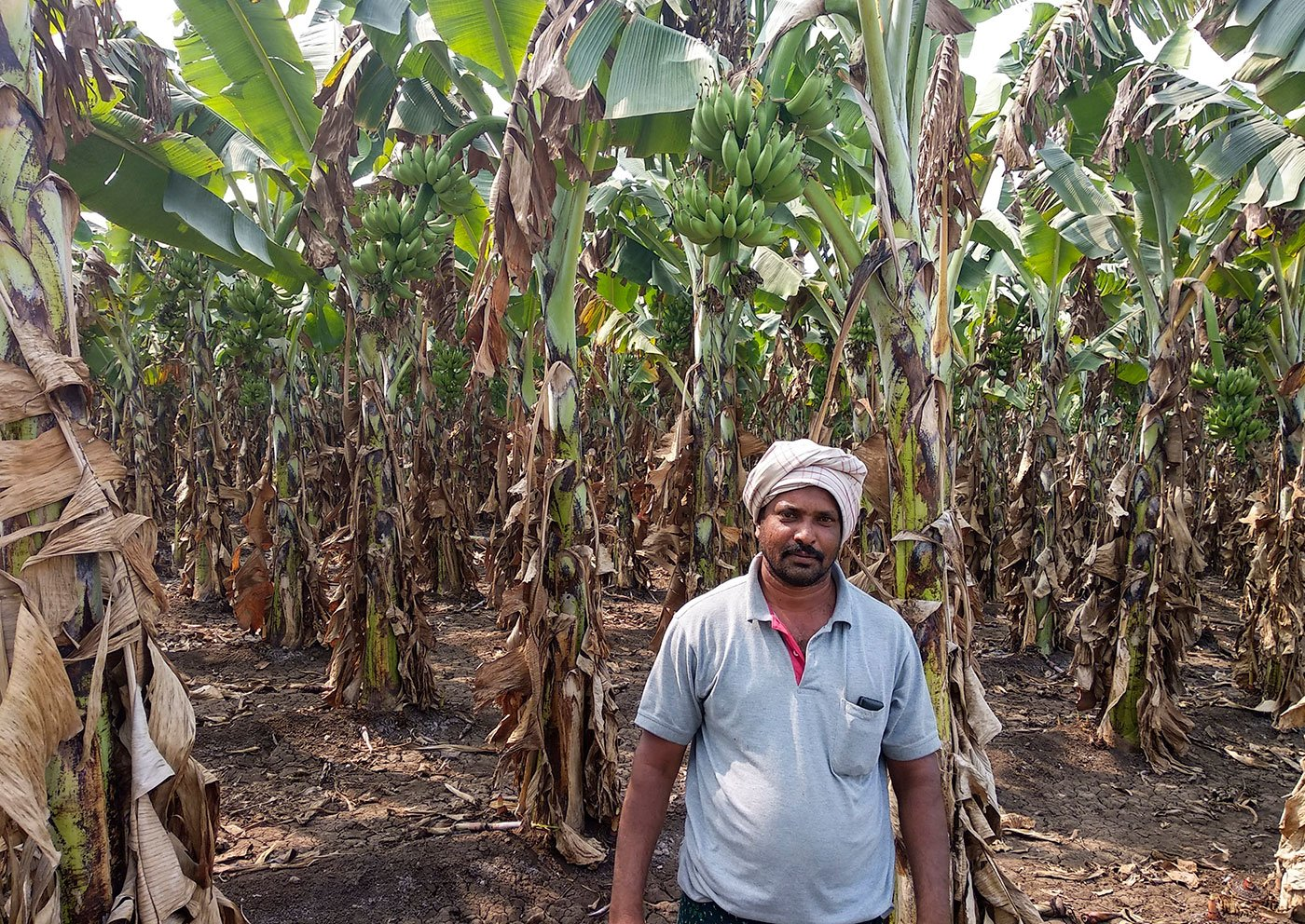 Krishna Reddy in front of his farm