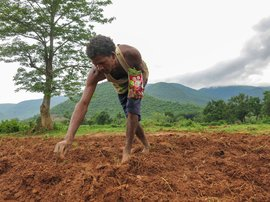 Sowing the seeds of climate crisis in Odisha