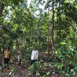 01-Nitigotha-Community-Forest-Protection-CC-How to Steal a 79,000-crore Rupee Forest.jpg