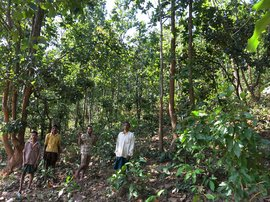How to steal a 79,000-crore rupee forest