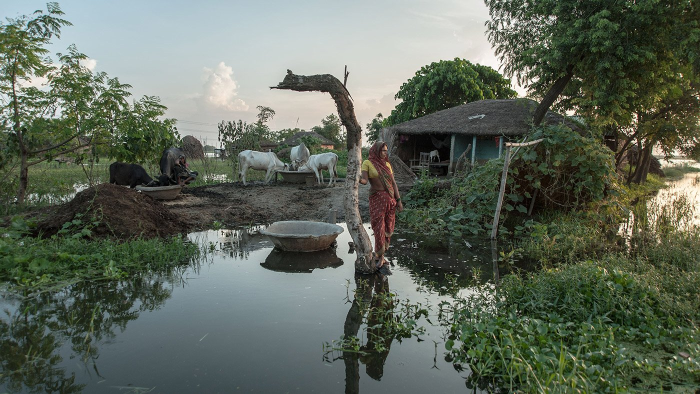 Woman standing in between submerged land with cows and hut in background