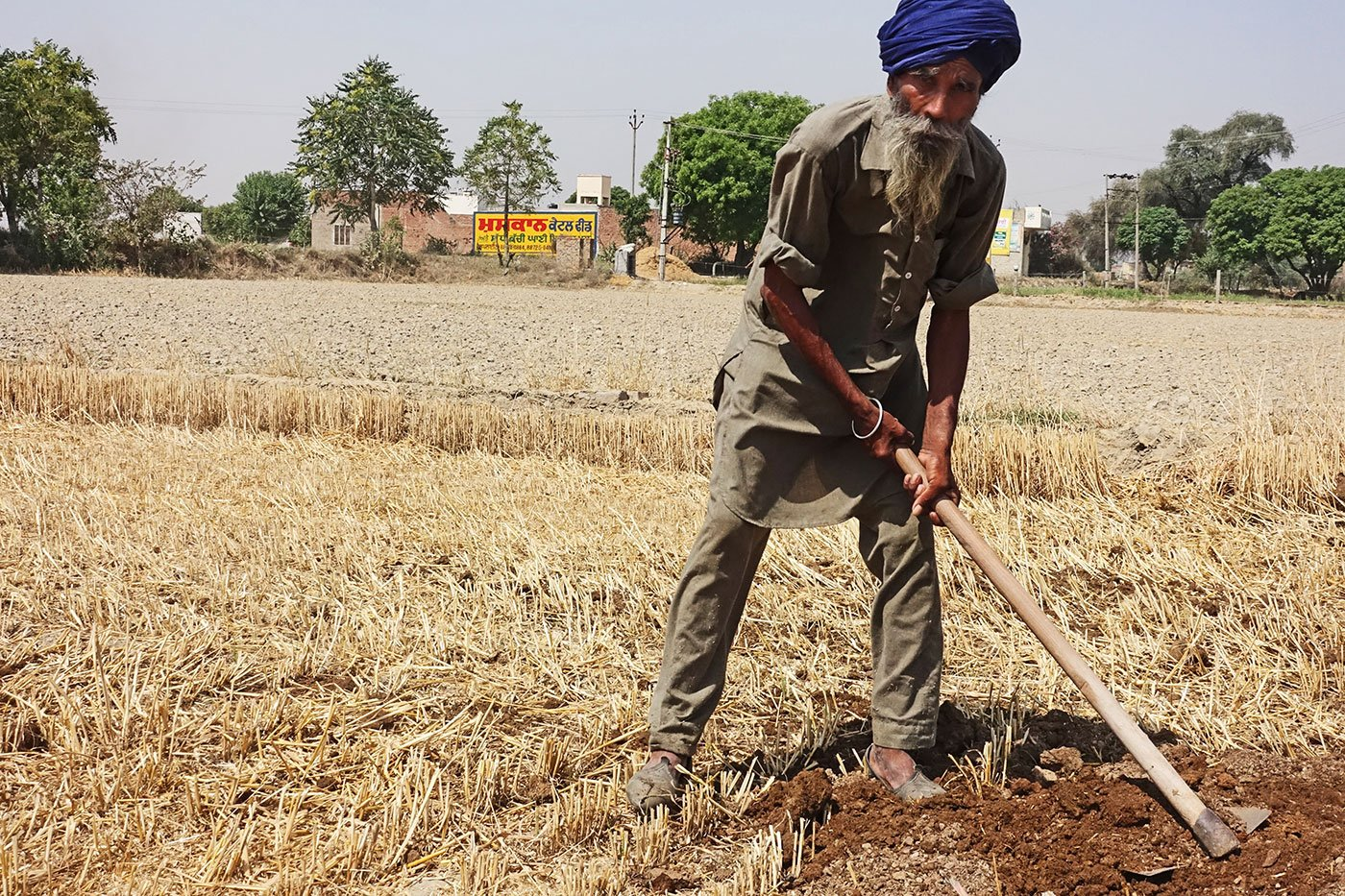 A Punjabi farmer in the field