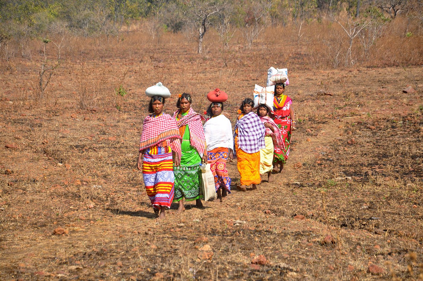 Tribal women walking in a field with a load on their heads