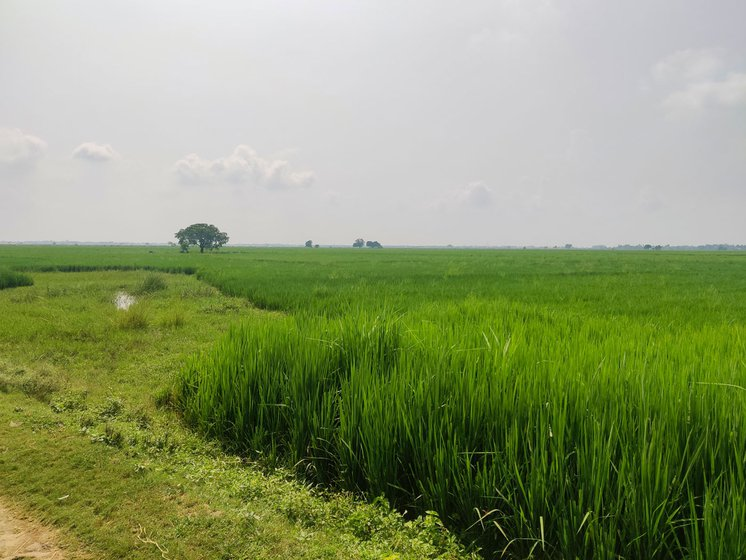 Rajiv Kumar Ojha's five-acre farmland in Chaumukh village