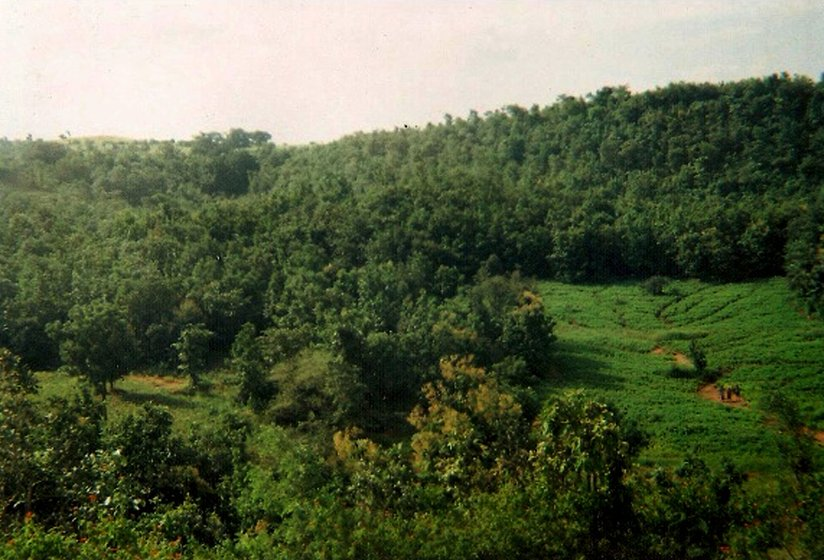 A panoramic view of the dense forest in Pujara ki Chowki village, among the few that still have such greenery. In the foreground is the farm of Ursia Punia, a Bhil cultivator