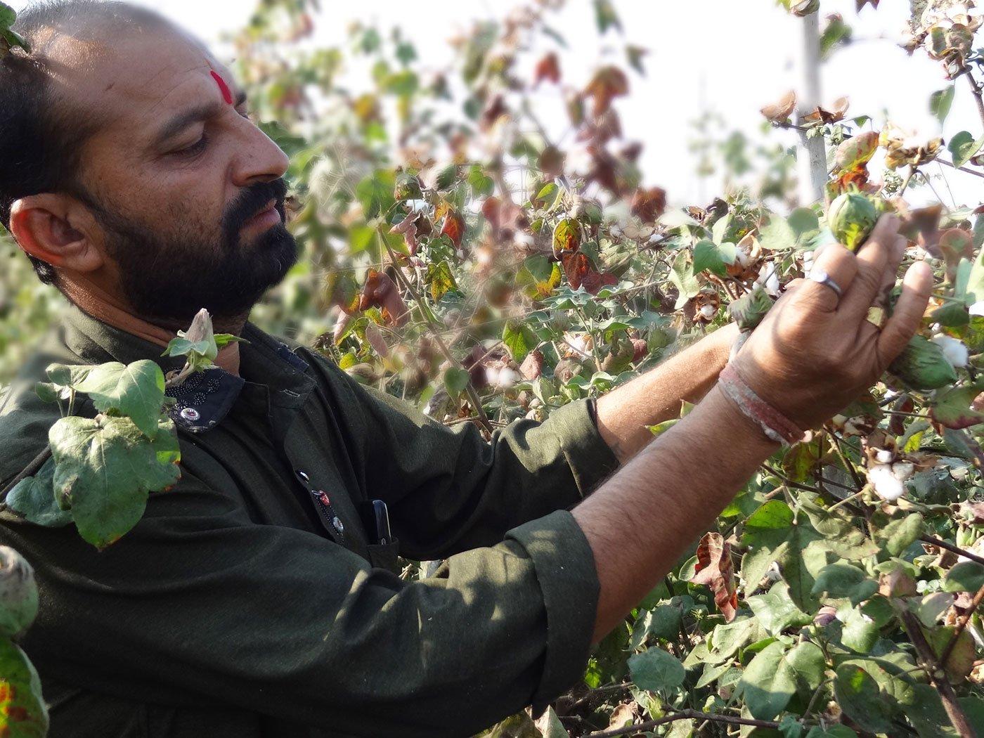 A man in cotton farm