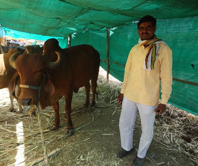 Prahlad with his ailing Gir cow at his cattle-shed in the cattle camp.