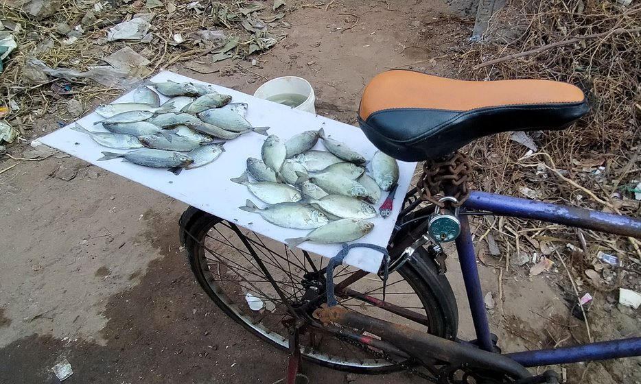 Left: Kasarapu Dhanaraju sold the fish secretly, on a 'stall' on his old rusted cycle. Right: Pappu Devi, who cleans and cuts the fish, says, 'I think I will survive [this period]'