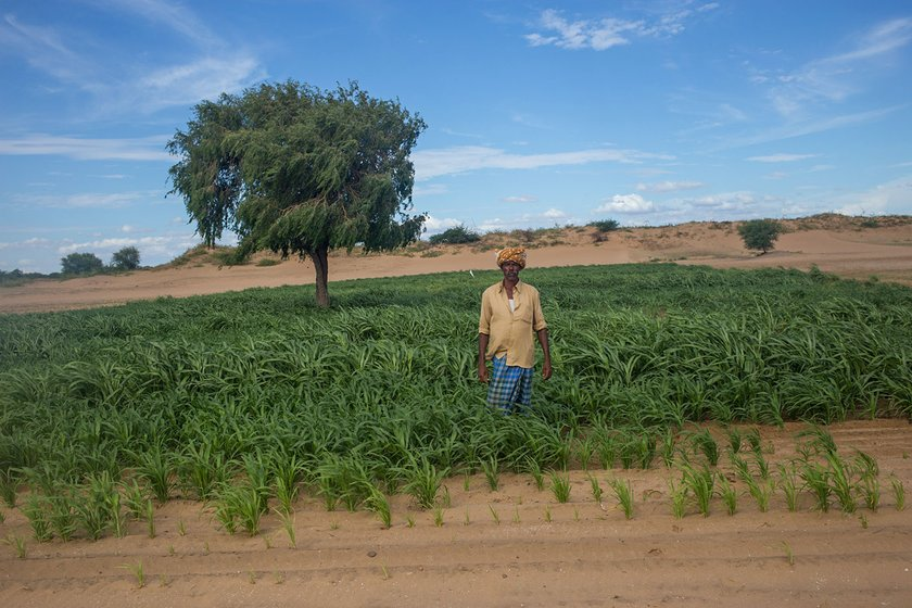 Pujarai Linganna in his field