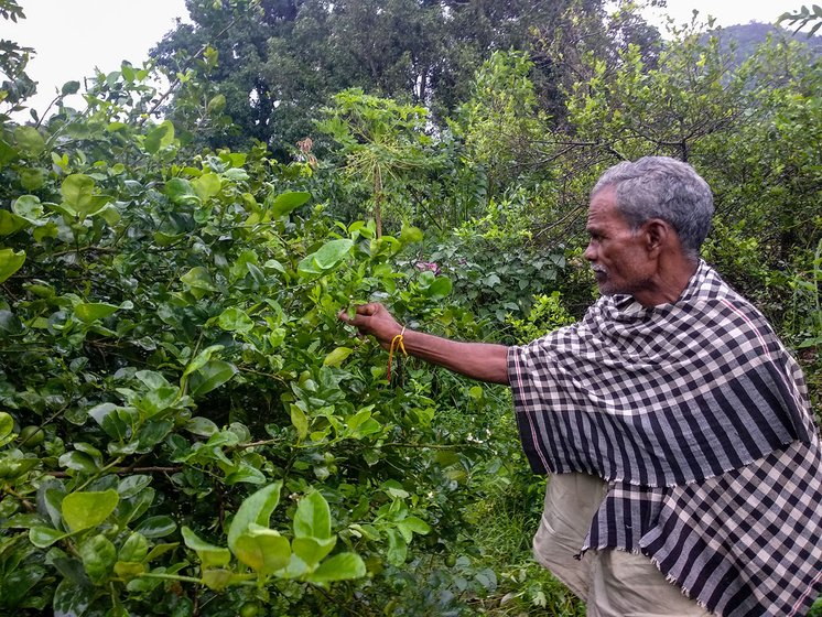 Mahendra's father, Lokanath looking at some plants