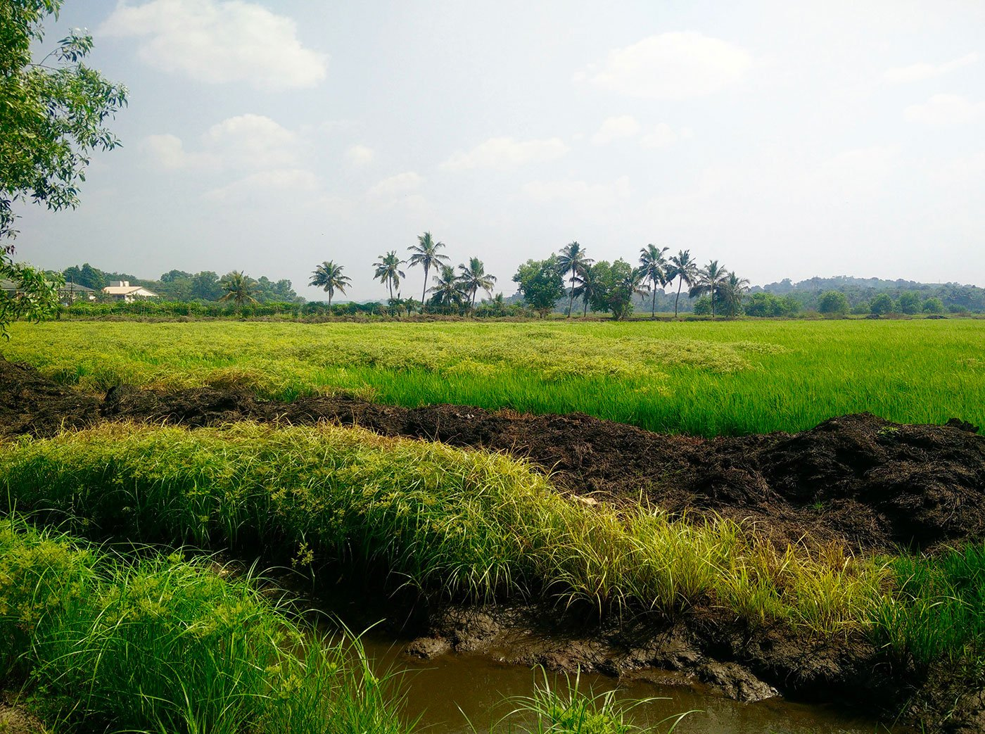 Promoting paddy, reclaiming rice in Kerala