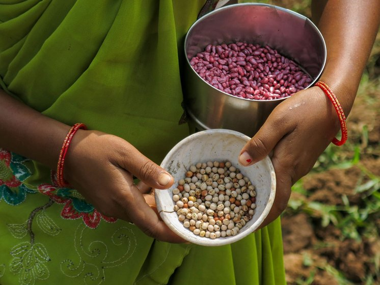 But many are reluctant to entirely abandon their indigenous food crops, such as pigeon pea. They sow this interspersed with cotton, thus feeding agri-chemicals meant for the cotton plants to their entire farm.