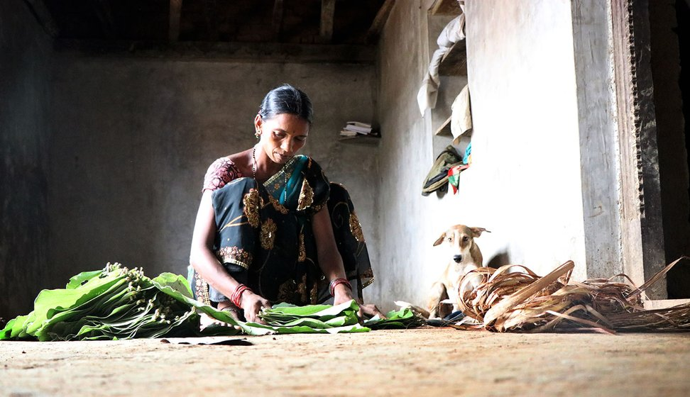 Tulshi making bundles out of the palash leaves