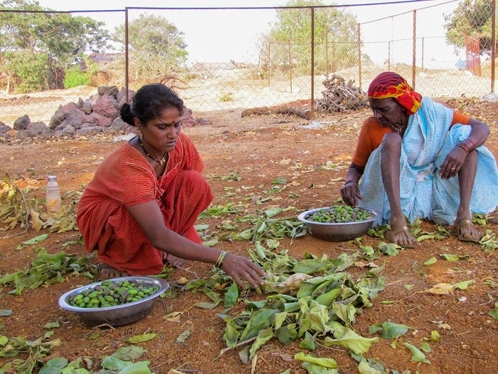 Two women sorting out vegetable leaves