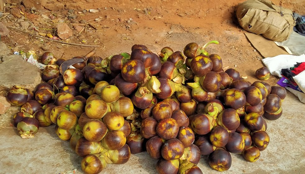 Inside the unhusked thaati kaaya is the munjalu fruit. It's semi-sweet and juicy, and in great demand during summers – even more than toddy – said Pappala Rao