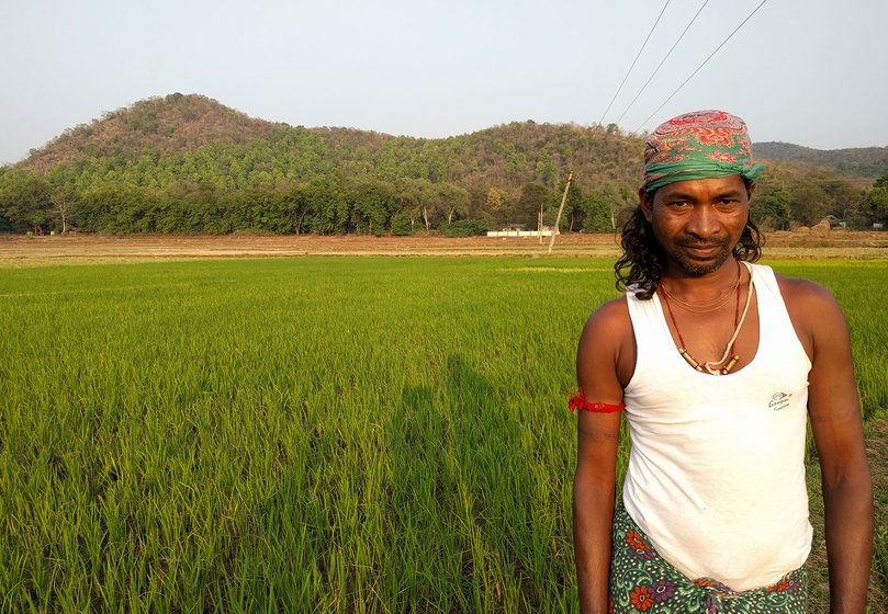 Tankadhar Pujhari, Kamala Pujhari's son, at their one-acre lowland paddy farm in Patraput hamlet