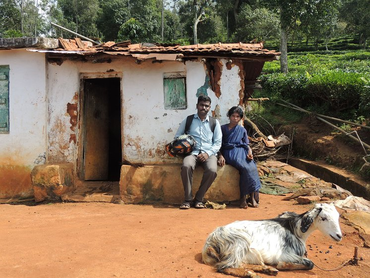 A young man and an old woman sitting outside a house with tea gardens in the background and a goat in the foreground
