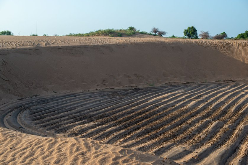 Honnureddy's painstakingly laid out rows of plants were covered in sand in four days.