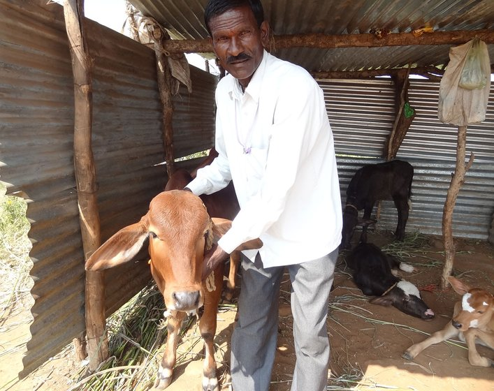 Pandurang Meshram in the cattle shed