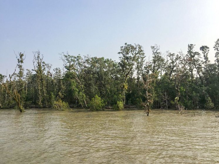 The Indian Sundarbans