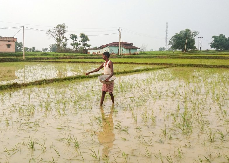 Teera has borrowed money to cultivate rice and some maize on two acres