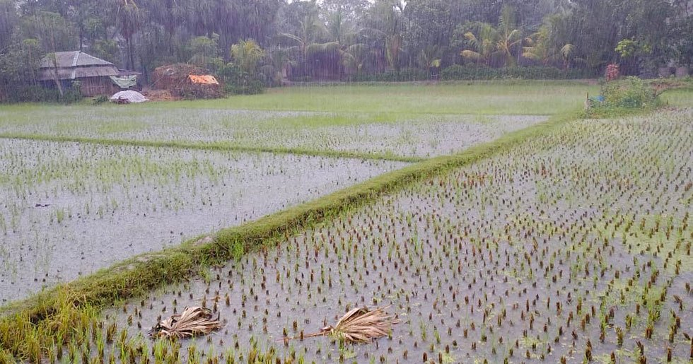Farmers in Chak Lachhipur village, including Abdul's eldest brother, suffered huge losses due to Cyclone Amphan