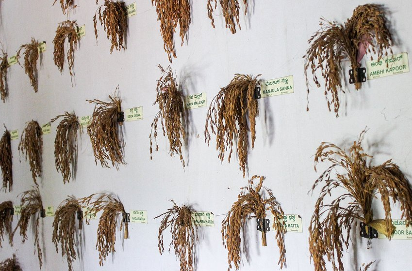 Desi paddy varieties and their names