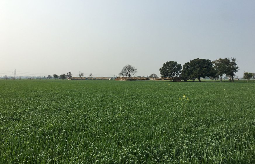 Wheat fields surround the railway station of Harsana Kalan, a village of around 5,000 people in Haryana