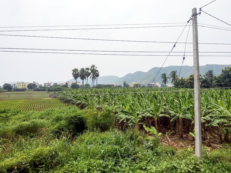 Crops being grown in Undavalli being grown in lands which have not given for pooling
