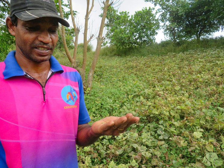 In Khadkipada hamlet, Damu Bhoye said, 'My farm is filled with bugs [due to the unseasonal rain], eating all the leaves and pods'