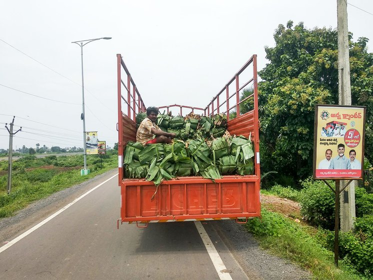 Fresh banana leaves just cut and being taken to the market