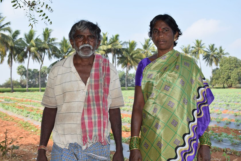 Left: Chintala Yadamma and her husband Chintala Peddulu with their watermelon crop. Right: 'How can I leave it now? I have invested Rs. 150,000 so far', says Bommu Saidulu, who was spraying insecticide in his three-acre crop when I met him
