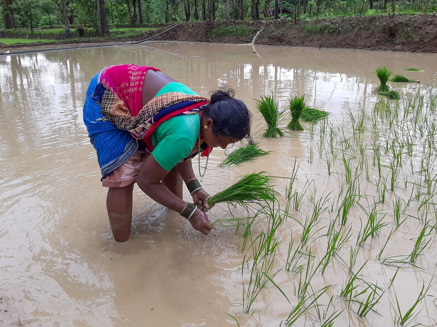 'We earn 4,000 rupees per acre, and together manage to plant saplings on two acres every day'