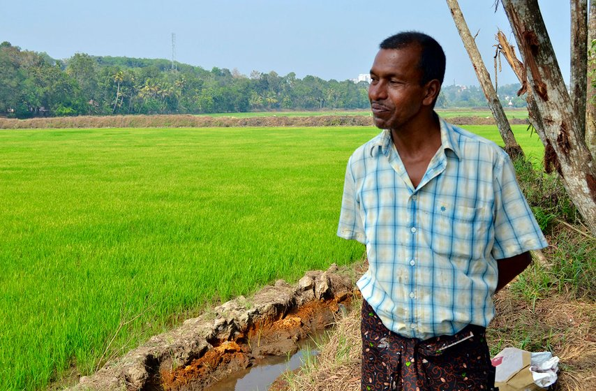 Jose George overlooking the ten acres of paddy he is co-cultivating on in Kalathilkadavu, a village in Panachikkadu block, Kottayam district