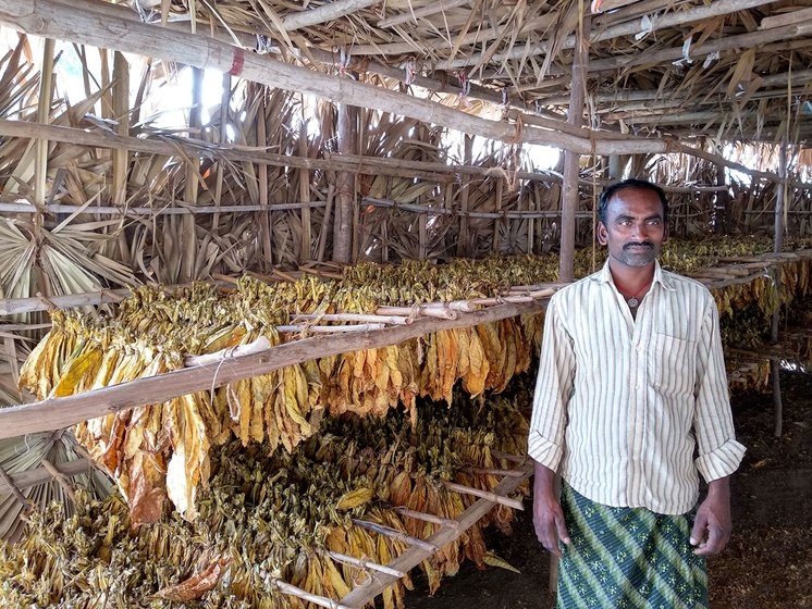 Srinivasa Rao at his shed where the tobacco is dried after removing it out of the barn