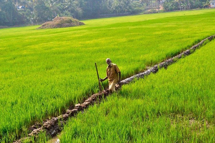 Farmer Kerala Stock Photos and Images  alamycom