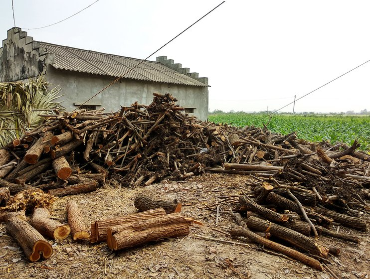 Firewood ready to be used in the barn at T Agraharam and a barn in the background
