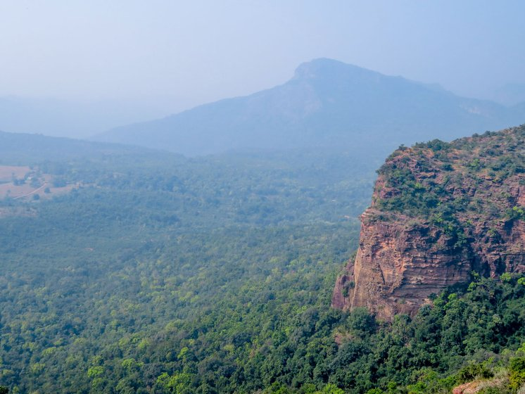 Ant hills in the Satpura tiger reserve of MP. 'Deforestation and fragmentation coupled with climate change are leading to disturbed habitats', says Dr. Himender Bharti, India's 'Ant Man'