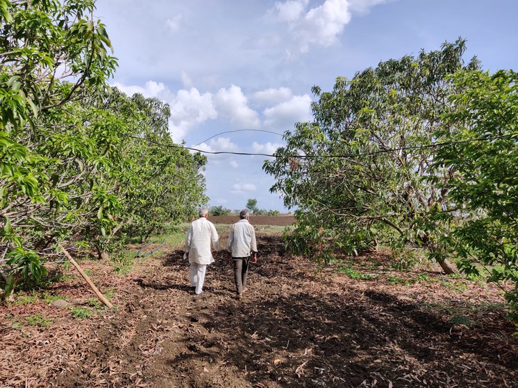 Madhukar and his son Gunwant walking through their orchards