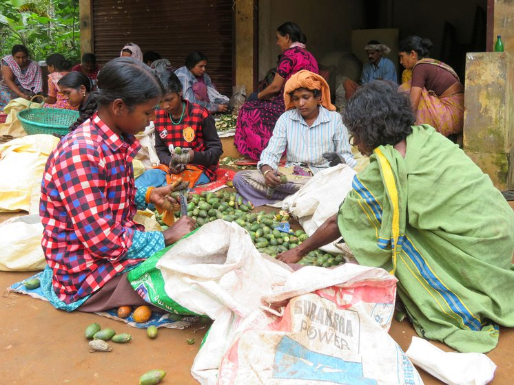 Adivasi women peeling areca nuts – the uncertainty of wage labour on the farms and estates here means uncertain family incomes and rations